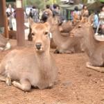 是非見て欲しい奈良 東大寺~奈良町散策の旅