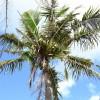 2012年グアム旅行 続・ヒルトン前ビーチとイパオビーチ ~ グアムのショッピング