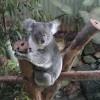 ケアンズのもう1つの【世界遺産】 キュランダの熱帯雨林へ行ってきた!!【後編】