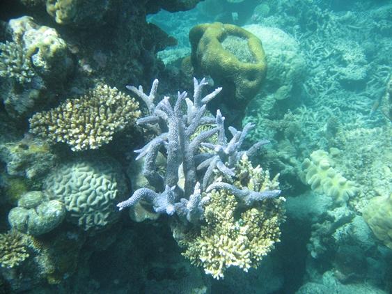 グレートバリアリーフの珊瑚礁