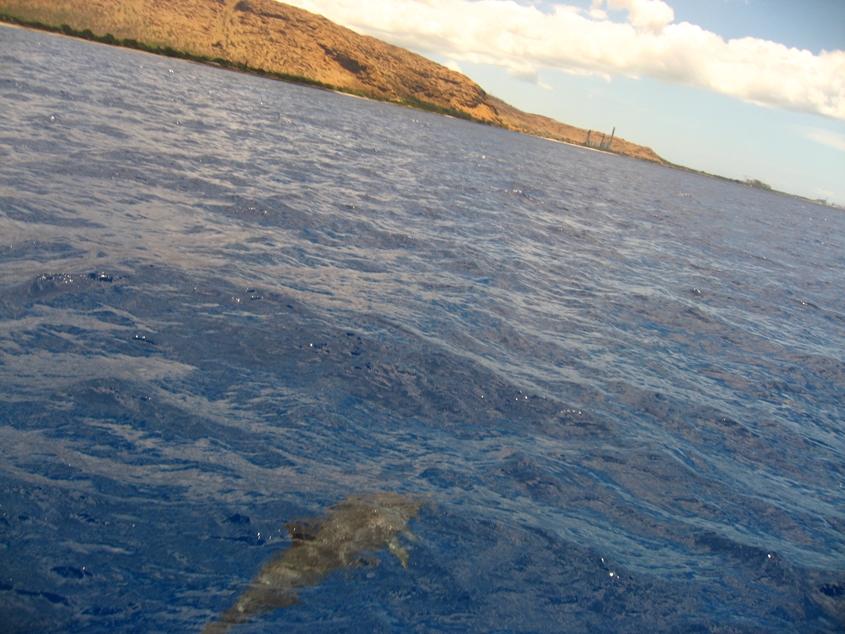 ハワイでイルカと遭遇