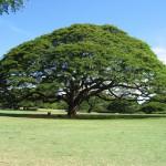 ハワイ4日目 リムジンでハワイの観光地をめぐる旅